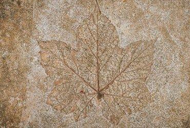 concrete engraving waterloo